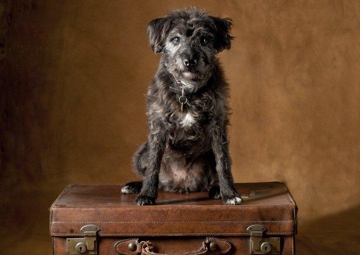 canine-portraits-stengard-green