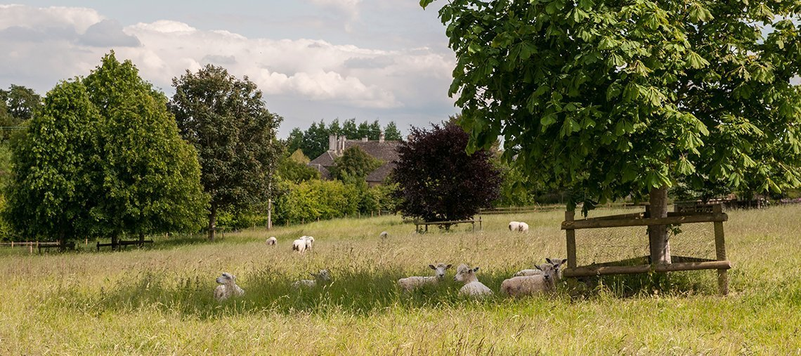 greys-court-cottages-southrop-sheep-field-walks