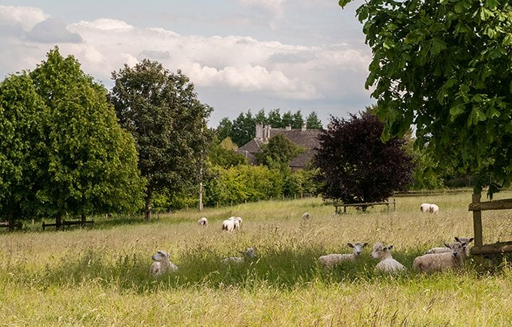 greys-court-cottages-southrop-sheep-field-walks-feat