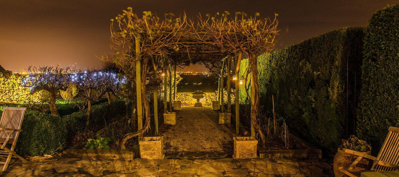 dryhill-night-vines