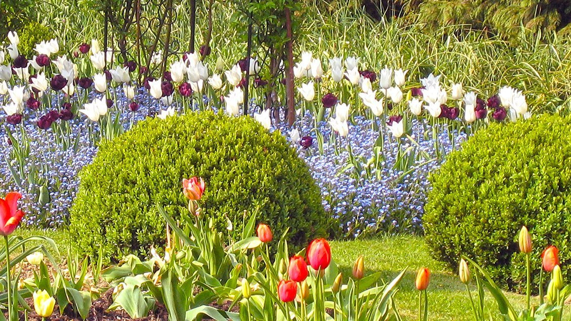 bruern-holiday-cottages-tulips