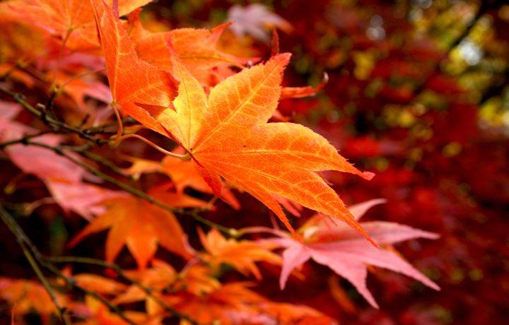 westonbirt-autumn-featured