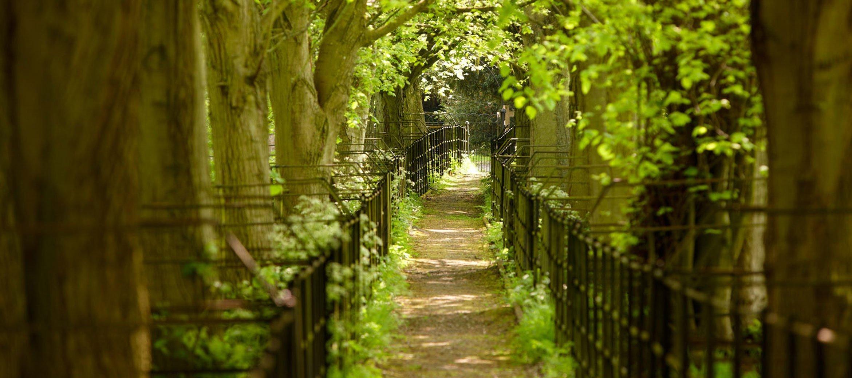 cornwell-manor-tree-avenue-walk