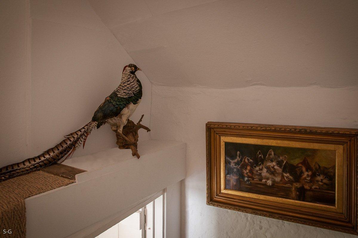 luxury-kingham-cotswold-cottage-8595-edit