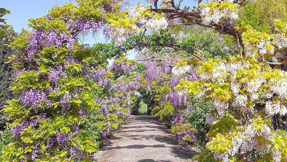 bruern-holiday-cottages-clematis_walk