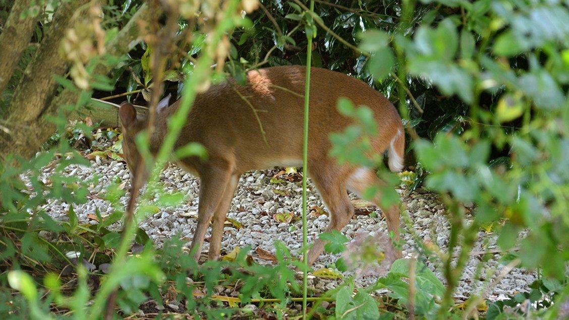 bruern-holiday-cottages-deer